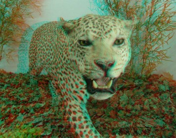 Anaglyph Example